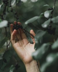 hand-grabs-tree-berries_4460x4460